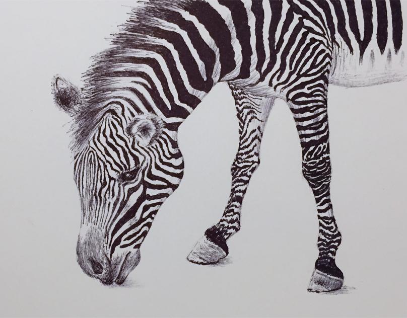Zebra 2020
